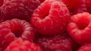 hindbær cocktaiils